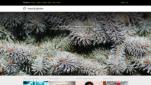 Morguefile Stockphotos Bilder Videos Alternative Screenshot 1